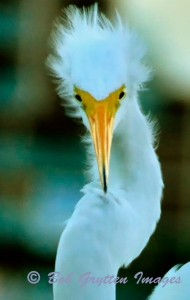 You talk'n to me…? Captured at John's Pass in Treasure Island, FL by Bob