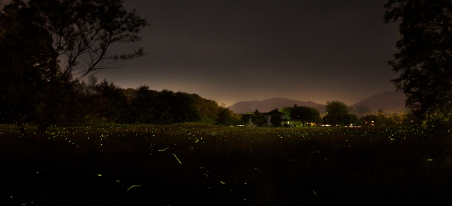 Fireflies by Chuck Dayton