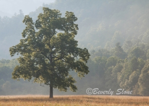 Lone Tree by Beverly Slone - Blue Ribbon winner