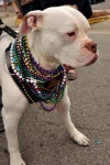 Follygras Bulldog with beads #1 by Bob Grytten