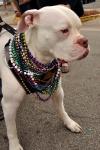 Follygras Bulldog with beads #1 by Bob Grytten