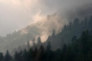 Mountain Mist, Great Smoky Mountain Natl Park