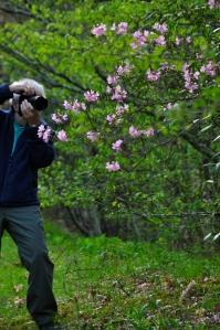 Louis Sasso Photographs Pink Shell Azaelea. Photo by Bob Grytten