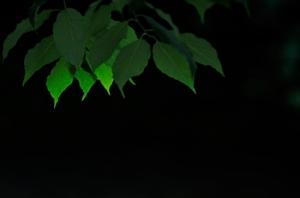 Leaves in soft Light
