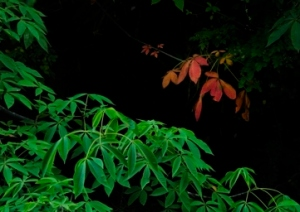 Leaves on bank, Frog Level, Waynesville, NC by Bob Grytten