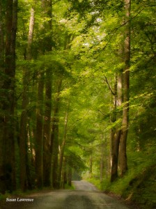 "Forest light by Susan ""B"" Lawrence copy"