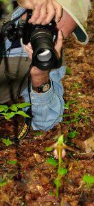 Photographer Chuck Coburn at work, GSMNP