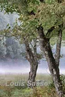 Louis Sasso Trees, Cat ©