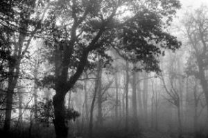 Trees in mist. By Louis Sasso